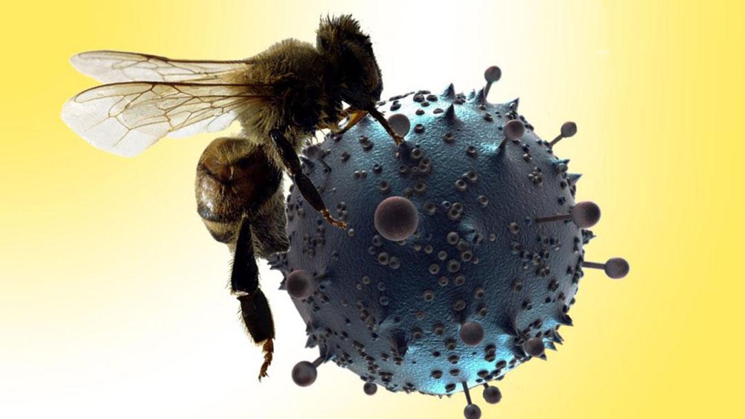 obat pencegah virus corona