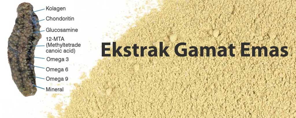 supplier ekstrak Gamat Emas Teripang
