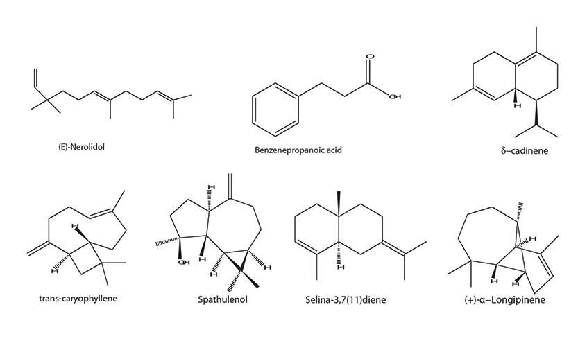 Senyawa volatil dari propolis hijau Brasil